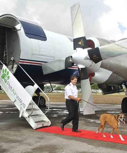Первая авиакомпания для домашних любимцев