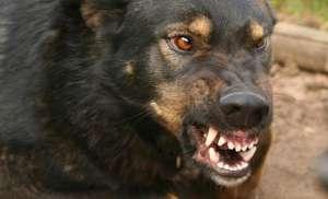 Электронный отпугиватель собак